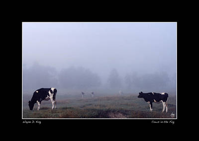 Photograph - Cows In The Mist Poster by Wayne King