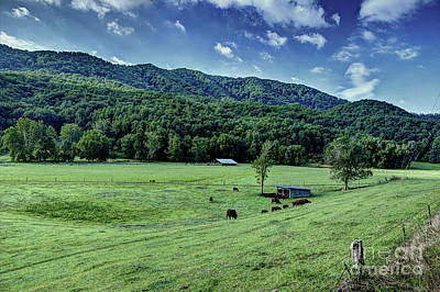 Photograph - Cows In The Smokies by Michael Eingle