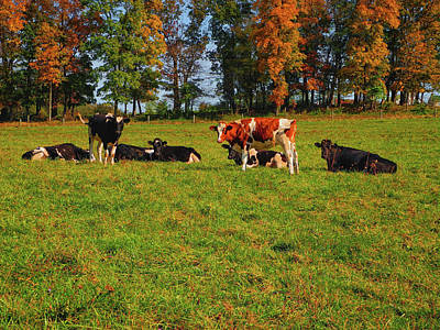 Photograph - Cows Of Section 10 Of Pa by Raymond Salani III