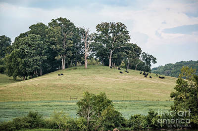Photograph - Cows On A Hill by Todd Blanchard