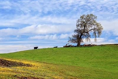 Photograph - Cows On A Spring Hill by James Eddy