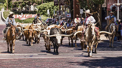 Cowtown Cattle Drive Art Print by Stephen Stookey