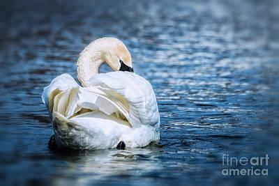 Photograph - Coy by Joann Long