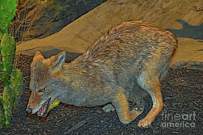 Photograph - Coyote 41318 by Ray Shrewsberry