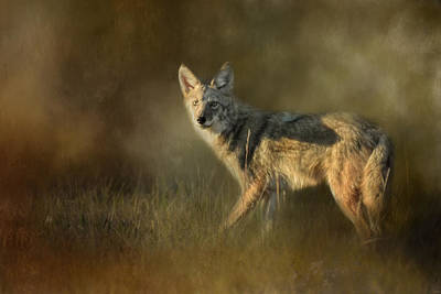 Photograph - Coyote At Sunset by Jai Johnson