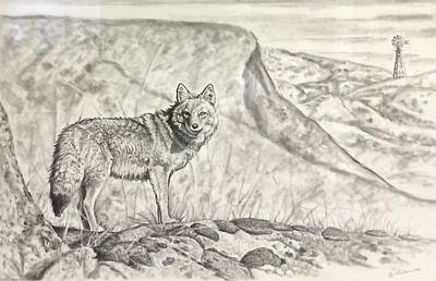 Drawing - Coyote by Bern Miller