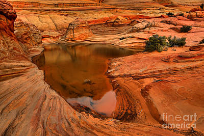 Photograph - Coyote Buttes Desert Oasis by Adam Jewell
