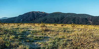 Photograph - Coyote Canyon Flower Fields by Daniel Hebard