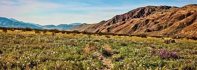 Photograph - Coyote Canyon Meadow View by Daniel Hebard
