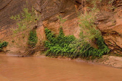 Photograph - Coyote Gulch Creek by Kunal Mehra