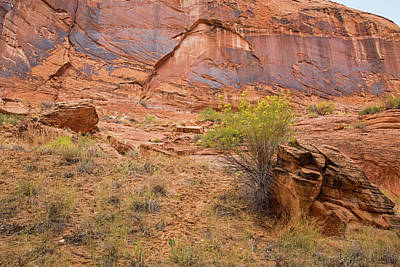 Photograph - Coyote Gulch Hike by Kunal Mehra