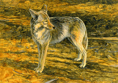 Painting - Coyote Sketch by Shari Erickson