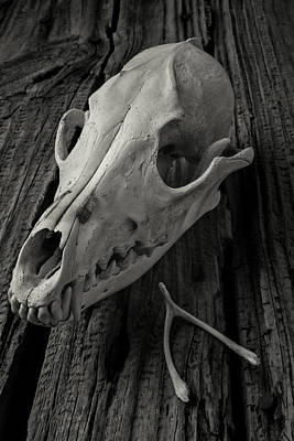 Photograph - Coyote Skull And Wishbone by Garry Gay