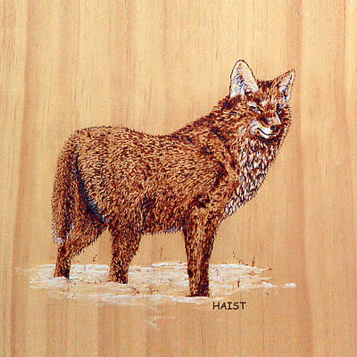 Pyrography - Coyote Snow Pillow/bag by Ron Haist
