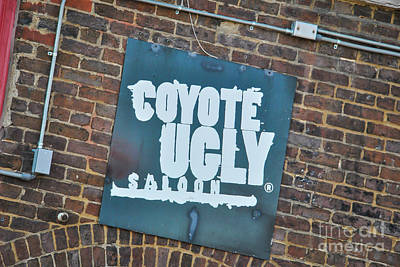 Photograph - Coyote Ugly by Pamela Williams