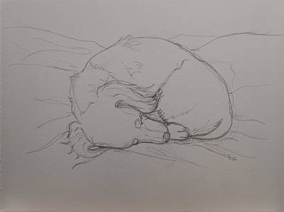 Doxie Drawing - Cozy by Carissa Sorensen