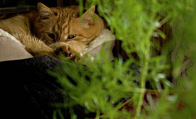 Hiding Photograph - Cozy Cat by ShaddowCat Arts - Sherry