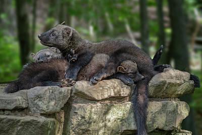 Photograph - Cozy Threesome by Dan Friend