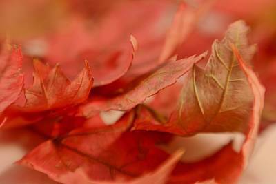 Photograph - Cozying Up To The Autumn Maple 4 by Diane Alexander
