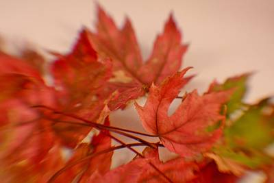 Photograph - Cozying Up To The Autumn Maple 5 by Diane Alexander