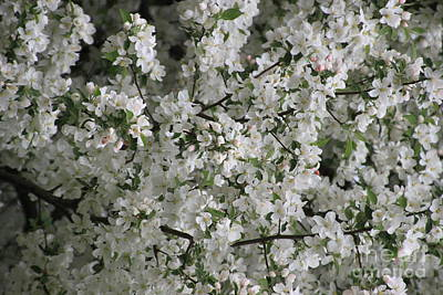Photograph - Crab Apple Blossoms 3 by Jennifer E Doll