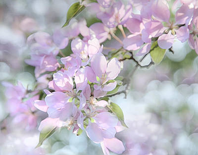 Photograph - Crab Apple Blossoms by Theresa Tahara