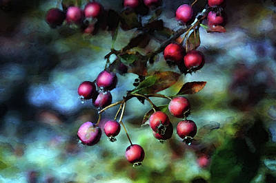 Photograph - Crab Apples 5935 Dp_2 by Steven Ward