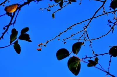 Jerry Sodorff Royalty-Free and Rights-Managed Images - Crab Apples Blue Sky 6510 by Jerry Sodorff