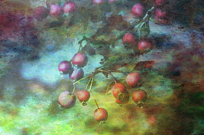 Photograph - Crab Apples Impression 5935 Idp_2 by Steven Ward