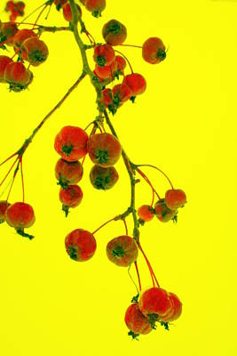 Photograph - Crab Apples by Julie Lueders