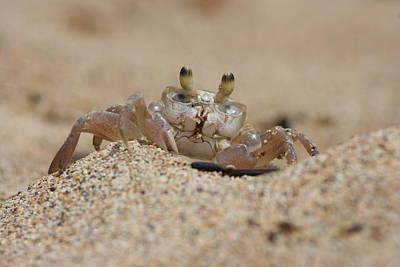 Crab Photograph - Crab by Bill Eggert