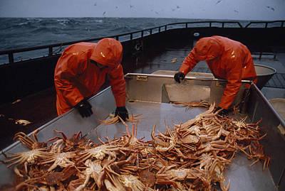 Crab Fishermen Sorting Their Catch Print by Chris Johns