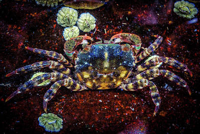 Photograph - Crab In The Water by Lilia D