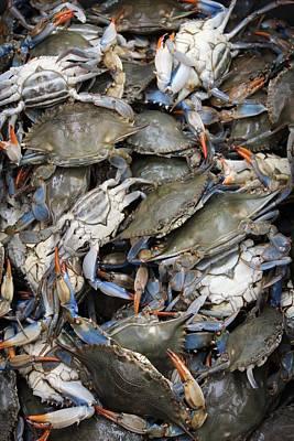 Crab Pile Print by Judy Bernier