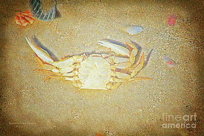 Photograph - Crab Shell by Inspirational Photo Creations Audrey Woods