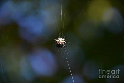 Photograph - Crab Spider - Macro by Adrian DeLeon