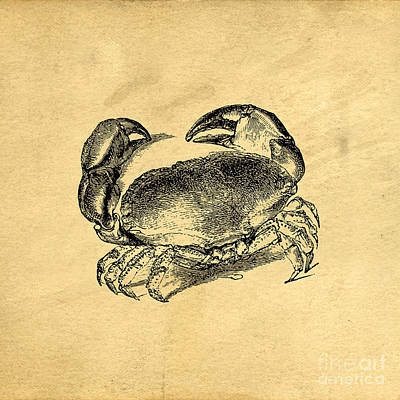 Print featuring the drawing Crab Vintage by Edward Fielding