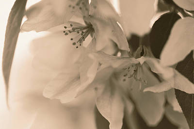 Photograph - Crabapple Blossom Copper by Donna L Munro