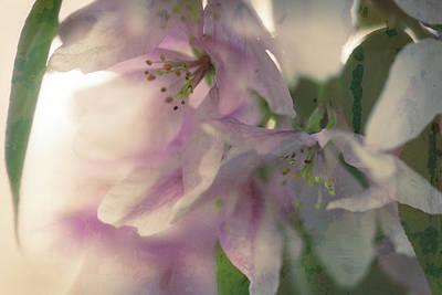 Digital Art - Crabapple Blossom Wash by Donna L Munro