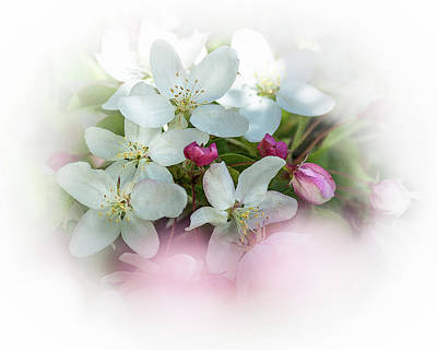 Photograph - Crabapple Blossoms 3 - by Julie Weber