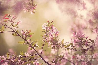 Crabapple Photograph - Crabapple Blossoms by Diane Diederich