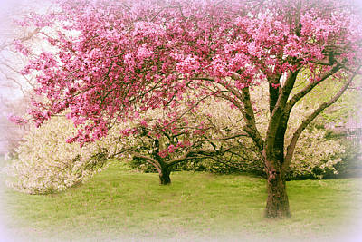 Photograph - Crabapple Confection by Jessica Jenney