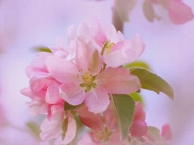 Photograph - Crabapple Pink by MTBobbins Photography