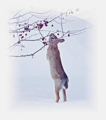 Photograph - Crabapple Snow Bunny Cropped - Rabbit With Vignette by MTBobbins Photography