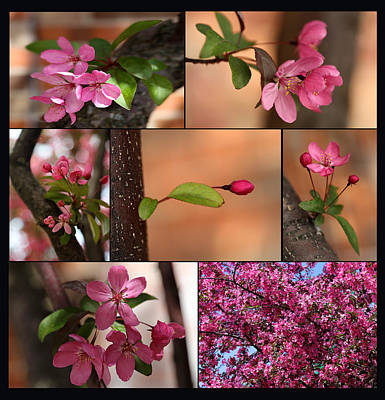 Photograph - Crabapple Spring 1 by Mary Bedy