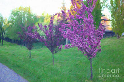 Digital Art - Crabapple Trees by Donna L Munro
