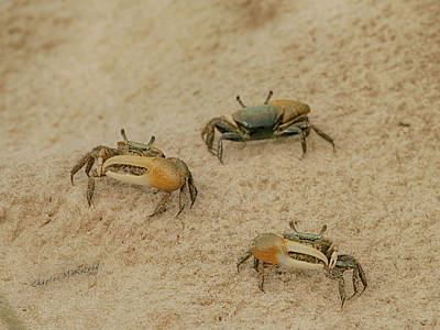 Photograph - Crabby by Charles McKelroy