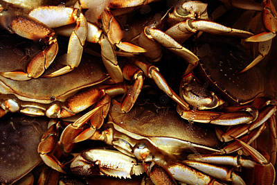 Crabs Awaiting Their Fate Art Print