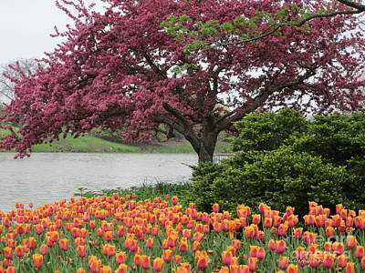 Photograph - Crabtrees And Tulips by Kathie Chicoine