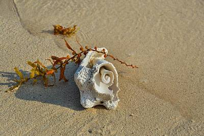 Photograph - Cracked Conch by JAMART Photography